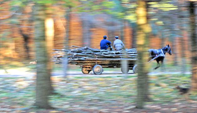 caruta-lemne-hotii-de-lemne