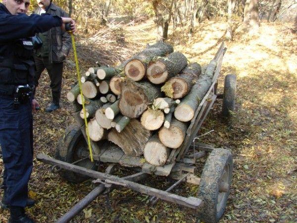arbori1