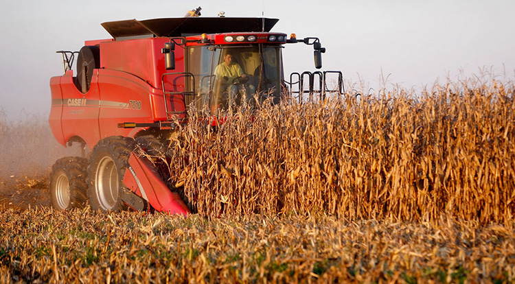 CARMI, IL - OCTOBER 04: Joe Raben harvests corn on land he farms with his father and uncle October 4, 2008 near Carmi, Illinois. A recent tumble in the price of corn and soybeans combined with the rising cost of seed, fuel, and land rents have many Midwestern farmers concerned. (Photo by Scott Olson/Getty Images)