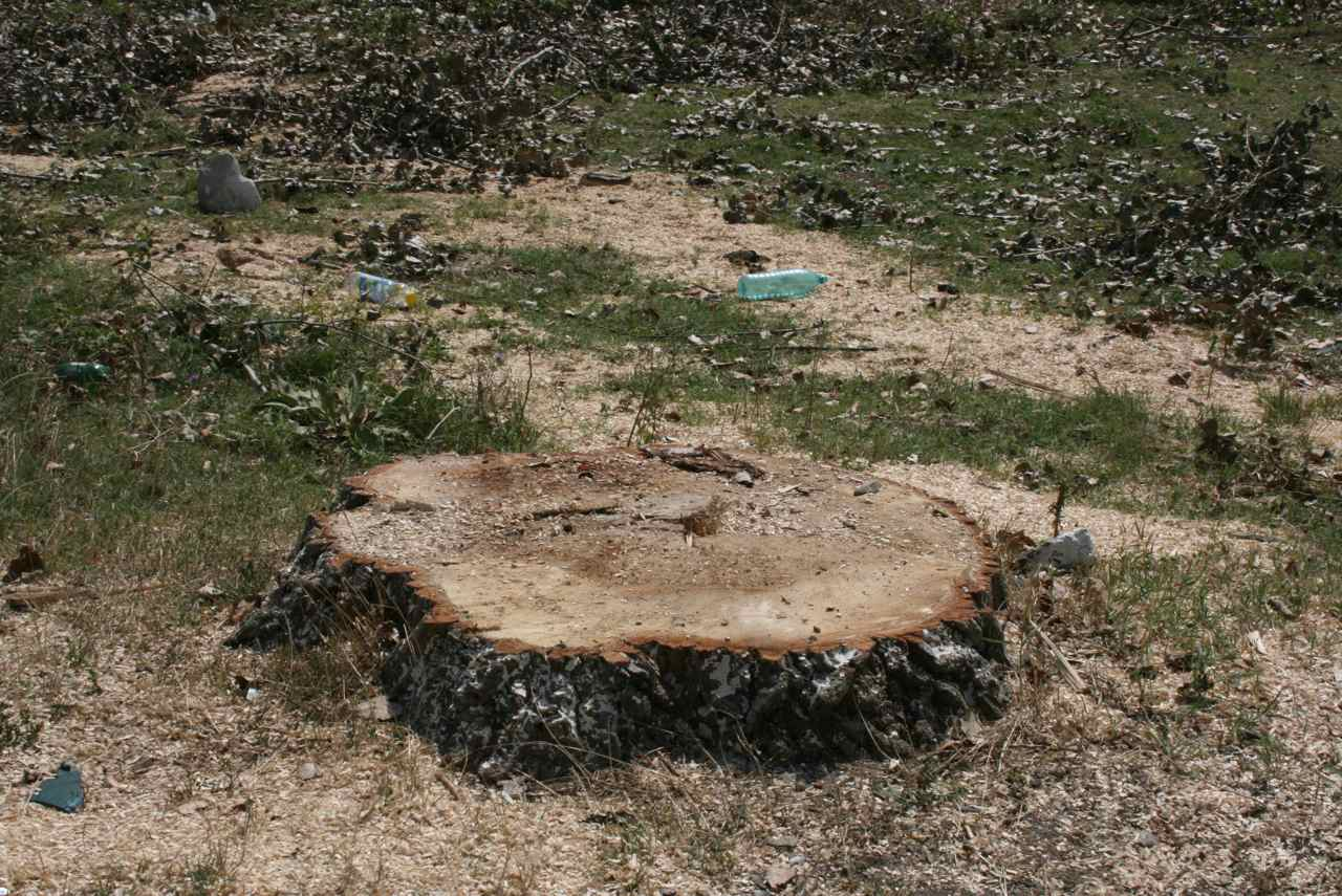 soseaua cernica caldararu plopi taiati septembrie 2010 - 01