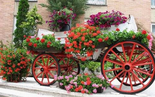 parada flori