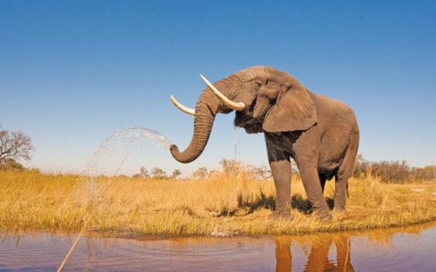 elefant-scapa-om-de-la-inec