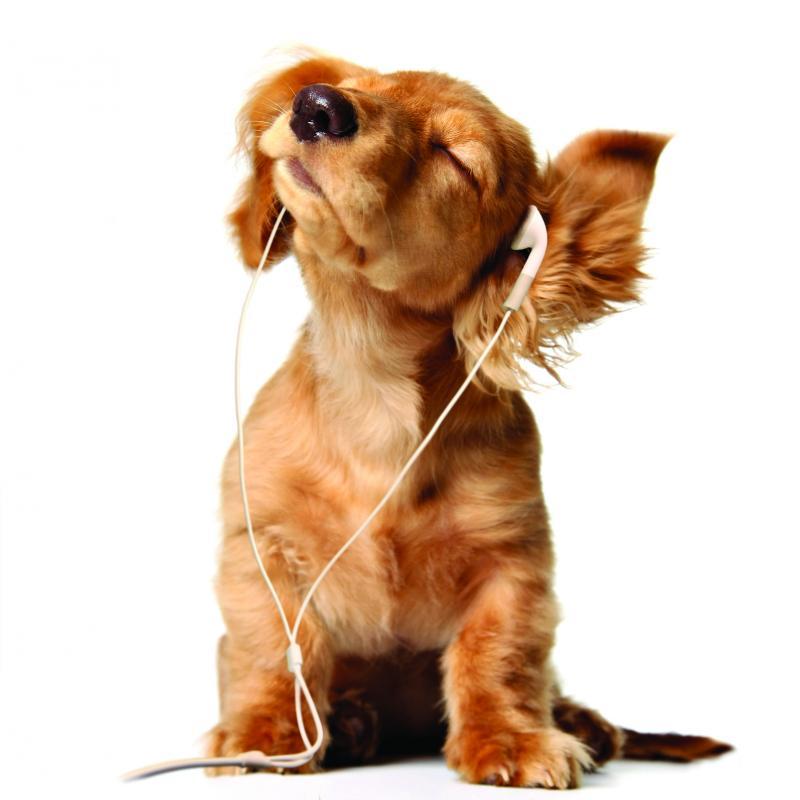 Câinii preferă sreggae și soft rock
