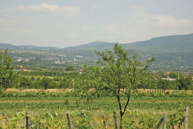 Tarna-Mare-1